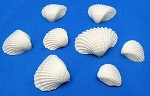 Sea Shell Mold Multiple