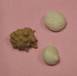Seaside Assorted Shell, Coral, and Sea Urchin By Sugar Delites