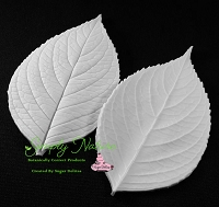 Hydrangea Leaf Veiner XL By Simply Nature Botanically Correct Products