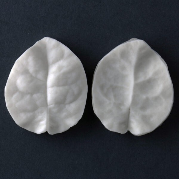 "Bougainvillea single bract veiner measurements – bract length 4 cm x width 3.5 cm. (bract length 2 3/16"" x width 1 3/8""). This distinctive range of botanically correct products are designed by master sugar artist Robert Haynes. These quality products can be used to replicate time and again, stunning life like flora in any edible or non-edible medium of your choice.  Robert personally selects each petal, leaf, flower center, fruit and bud to create a double-sided silicone mold capturing their shape, vein structure and unique botanical imprint, giving you the ultimate tools to reproduce stunning results.  All molds are hand poured at Sugar Delites (USA) using a high-quality platinum-based silicone, specially formulated for use in the food and confectionary industry and fully compliant to FDA and EU regulations.  They can be purchased at www.SugarDelites.com and other worldwide locations. Copyright © 2016 - Sugar Flower Studio Botanically Correct Products"