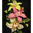"Cymbidium Orchid Cutters Large creates approximately a 5"" flower when finished."