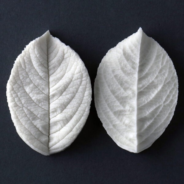 "Rugosa single medium rose leaf measurements – medium leaf length 6.6 cm x width 3.7 cm. (medium leaf length 2 3/16 "" x width 1 7/16""). This distinctive range of botanically correct products are designed by master sugar artist Robert Haynes. These quality products can be used to replicate time and again, stunning life like flora in any edible or non-edible medium of your choice.  Robert personally selects each petal, leaf, flower center, fruit and bud to create a double-sided silicone mold capturing their shape, vein structure and unique botanical imprint, giving you the ultimate tools to reproduce stunning results.  All molds are hand poured at Sugar Delites (USA) using a high-quality platinum-based silicone, specially formulated for use in the food and confectionary industry and fully compliant to FDA and EU regulations.  They can be purchased at www.SugarDelites.com and other worldwide locations. Copyright © 2016 - Sugar Flower Studio Botanically Correct Products"