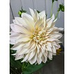 "White Ball Dahlia Petal Veiner by Simply Nature Botanically Correct Products®, was created by Jason Dontz and Jennifer Dontz of Sugar Delites, and creates the most realistic White Ball Dahlia petal interpretation possible. The White Ball Dahlia petal veiner measures 2 5/8"" x 1 1/8"". Simply Nature brand veiners capture each ruffle, pillow & vein because they were created from the actual top and the actual bottom of each leaf or petal, thus creating the most realistic replica of nature.  Botanically correct veiners leave room for your wire and will not cut your paste and since the veiners were created by nature, they also shape and form your medium as well. Each Simply Nature Brand veiner is made in the USA and is poured using the highest quality platinum based, food approved silicone. The matching cutter(s) for this veiner(s) is CUT606."
